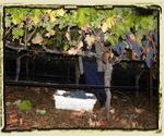 2009 Harvest