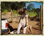 2006 Harvest